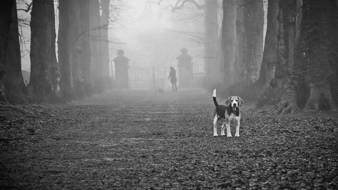 beagle_backdrop_greyscale